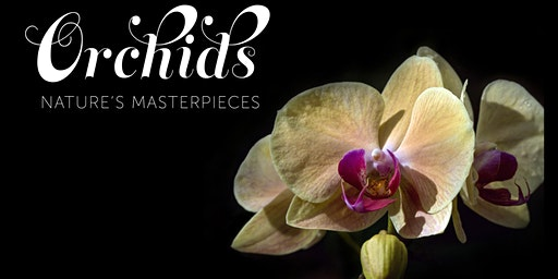 Orchids De-Mystified