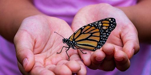 Mariposas: ¡Las hadas de la reserva!
