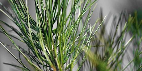 Winter Wonders: Pine-Infused Home Goodies tickets