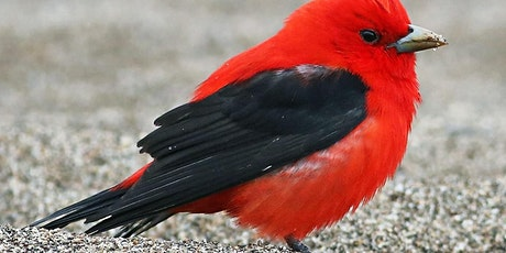Autumn Bird Walk with Alan Devoe Bird Club tickets