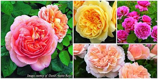Rose Weekend 2020