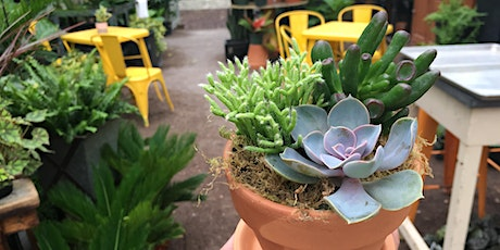 Craft Lab: Windowsill Succulent Pots tickets