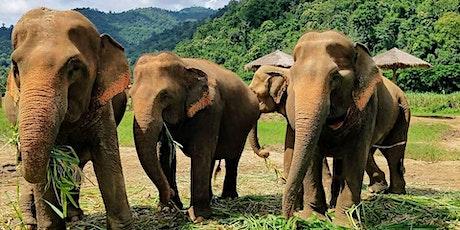 Elephants Austin; Earth Day for Elephants Fundraiser tickets