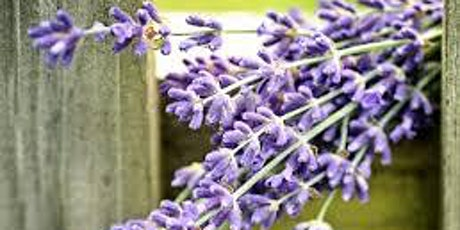 Horticulture for Adults: Story of Lavender tickets