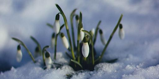 Il Sistema Immunitario: Mi Preparo Alla Primavera