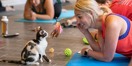 Kitten Yoga with Corepower Yoga and West Village tickets