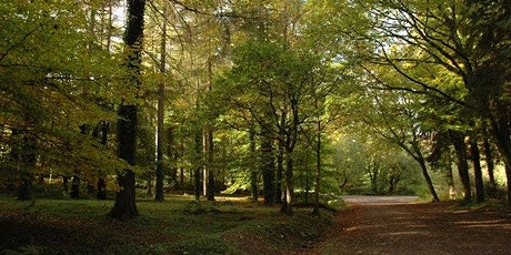Walk 15 Whitebrook and Trellech Common via the no 69 and 65 buses tickets