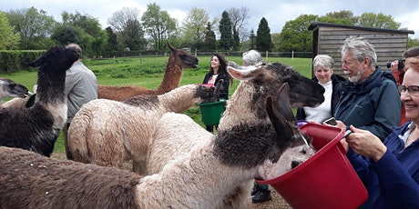 Walk 18 Chepstow Park Wood and Devauden with Llamas tickets