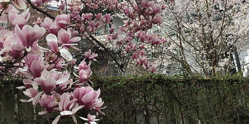 Baltimore Blooms Magnolia Grove Picnic