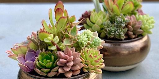 Succulent planter workshop