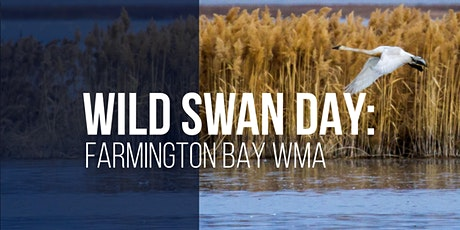 Wild Swan Day: Farmington Bay WMA tickets
