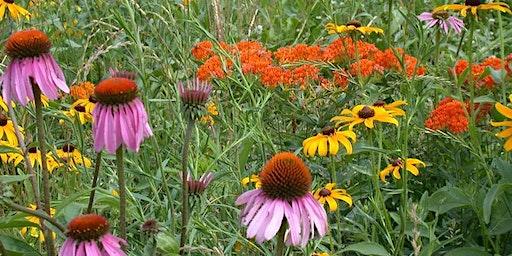 Native Plants for Pollinators / Cardno Native Plant Nursery