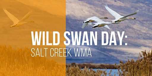 Wild Swan Day: Salt Creek WMA