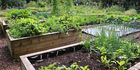 Raised Bed Gardening - Walk and Talk Class Series tickets