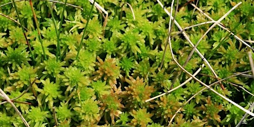 Sphagnum Moss Planting at Hen Cloud / Roaches