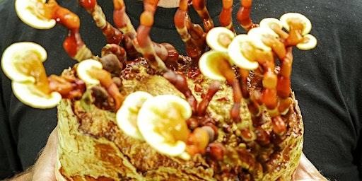 Magnificent Mycelium