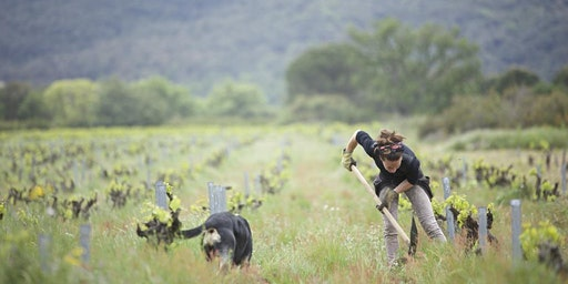 Environmental Film Festival: WINE CALLING