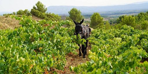 A Grape Exploration - French Wine Tasting Dinner
