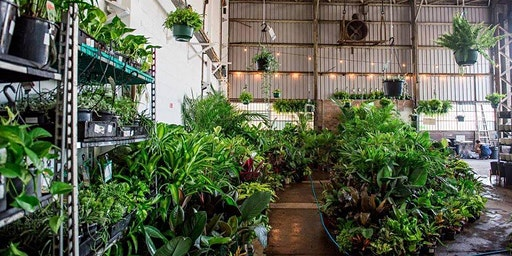Richmond - Huge Indoor Plant Warehouse Sale - Tropicana Party