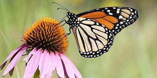 Plan your Pollinator Garden!