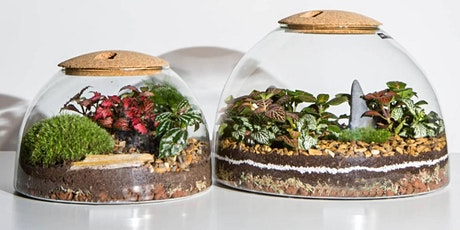 Mothers Day Terrarium  Workshop with  LSA  and  The Forest Distillery tickets