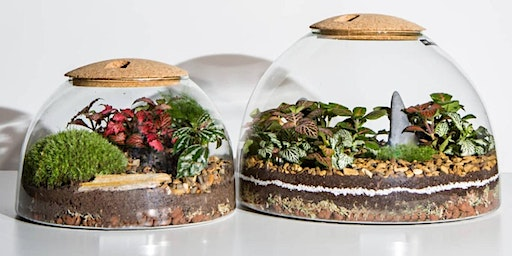 Mothers Day Terrarium  Workshop with  LSA  and  The Forest Distillery