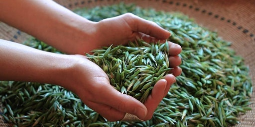 Wise Woman Herbal Workshop for Midwives & Birth Workers
