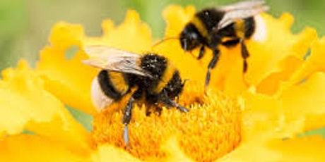 Beekeeping Presentation @ Leytonstone Library Plus tickets