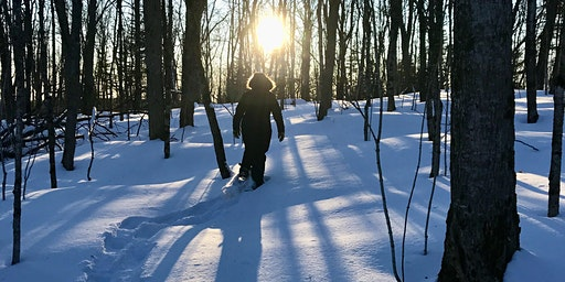 Guided Forest Therapy Walk - Midwinter New Moon