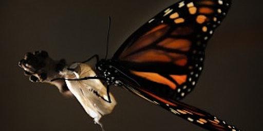 Samentafel Leiderschap in tijden van transformatie
