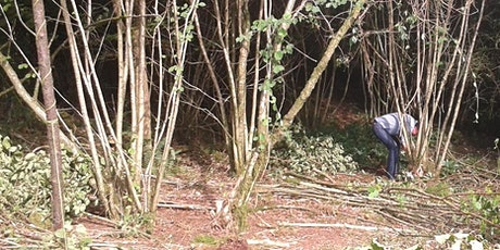 Coppicing Hazel at Chatelherault Country Park tickets