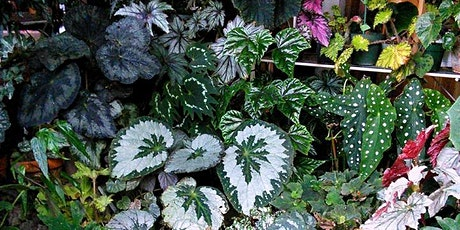Monthly Meeting -Basic Begonia Breeding tickets