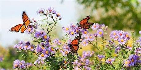 Nature Nurture Butterfly Retreat tickets