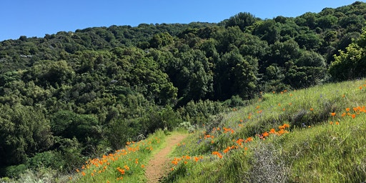 March Naturalist Walk: Ferns, Flowers and Fungus at Foothills Park