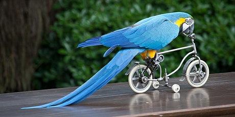 Birding by Bicycle at Mason Mill Park tickets