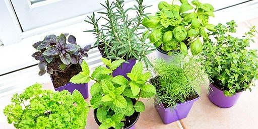 Growing and Preserving Herbs