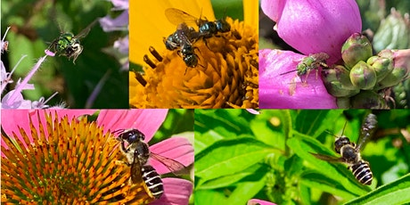 Native Bee Diversity 101 (BYOB) tickets