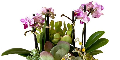 Leap into Spring with Cactus Flower Florists
