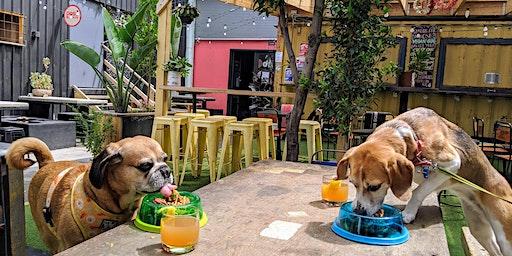 Footscray Puppy Pub Crawl