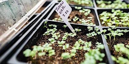 Jumpstart your  Vegetable Garden