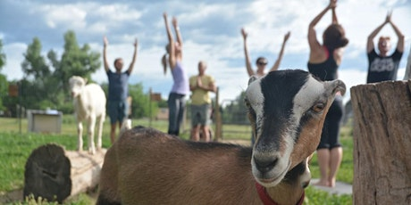 Baby Goat Yoga & Tour - Mountain Flower Goat Dairy, Boulder tickets