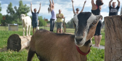 Baby Goat Yoga & Tour - Mountain Flower Goat Dairy, Boulder