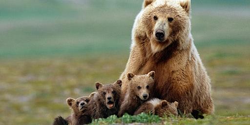 World Wildlife Day (8-11yrs)