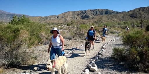 Happy Tails Dog Adventure at Whitewater Preserve