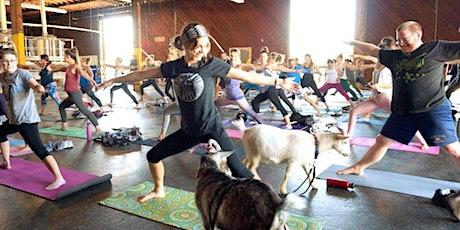 Brewery Goat Yoga  (San Pedro) tickets