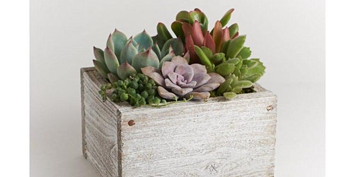 Sweet Succulent Garden at Trove Warehouse