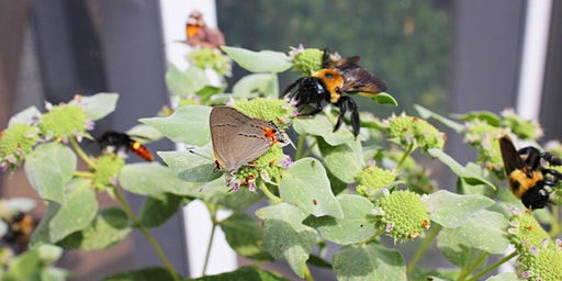 Powerhouse Native Plants for Wildlife
