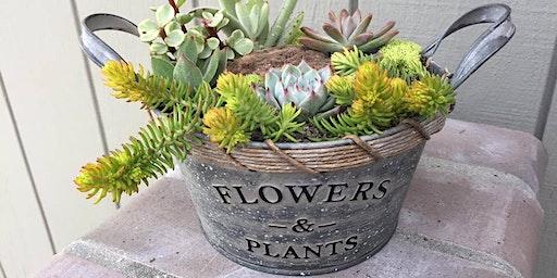 DIY succulent arrangement workshop at Citizen Vine Folsom