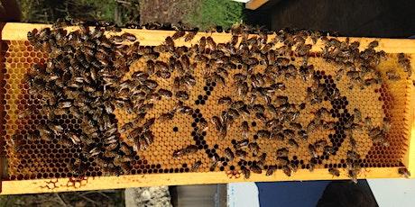 Swarm Prevention Workshop tickets