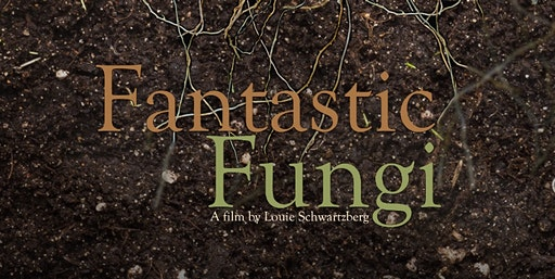 Positive Nights and Fun Ghis Present: Fantastic Fu